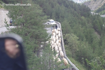 Col de Sommeiller - Almabtrieb