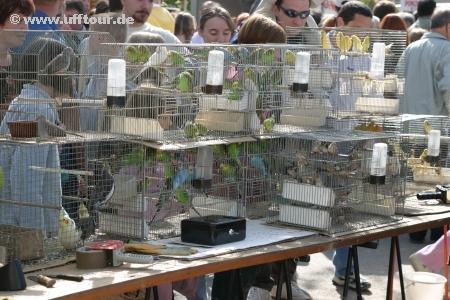 Bauernmarkt in Louhons - Ziervögel