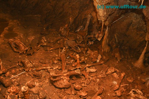Bärenhöhle Knochen
