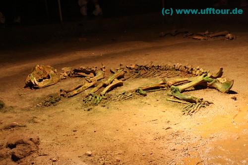 auch ein vollständiges Skelett ist zu sehen