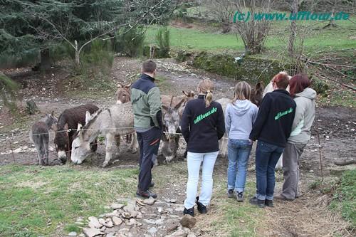 Eselswanderung - Auswahl der Esel
