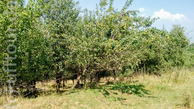 Speziell die Obstbäume stimmten mich nachdenklich. Einst unverzichtbar für das Überleben hier oben, ist heute niemand mehr da, der die Früchte erntet.