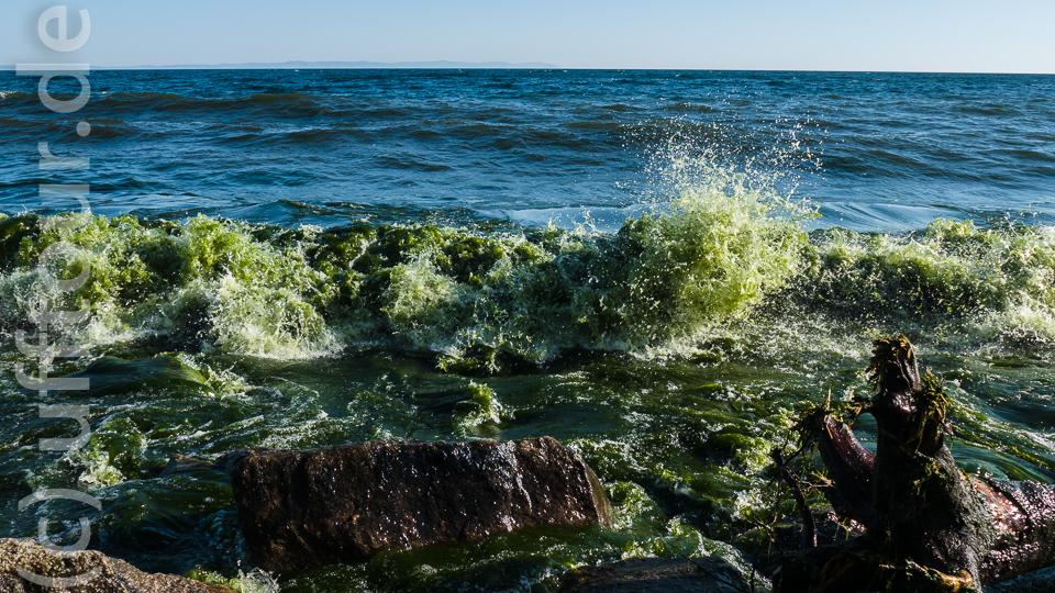 Irre. Dahinter war das Wasser nach wie vor tiefblau. Immer wieder staunen wir über die Schönheit und Vielfalt der Natur.