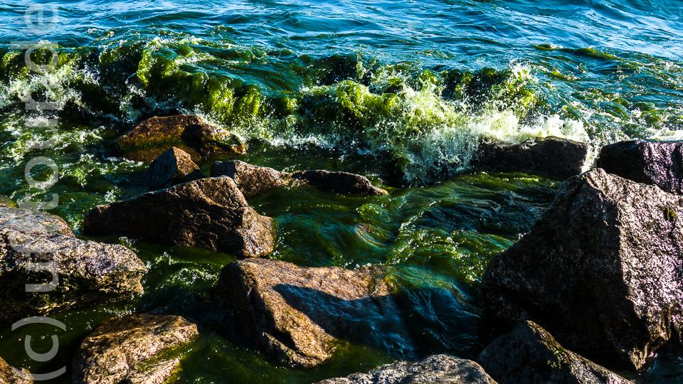 """Am nächsten Morgen verblüffte uns der Baikal mit einem unglaublichen Farbenspiel. Durch den starken Wind und den Wellengang am Vortag wurde offenbar eine große Menge Algen an """"unser"""" Ufer gespült und färbten das Wasser in einem mehrere Meter breiten Streifen tief grün."""