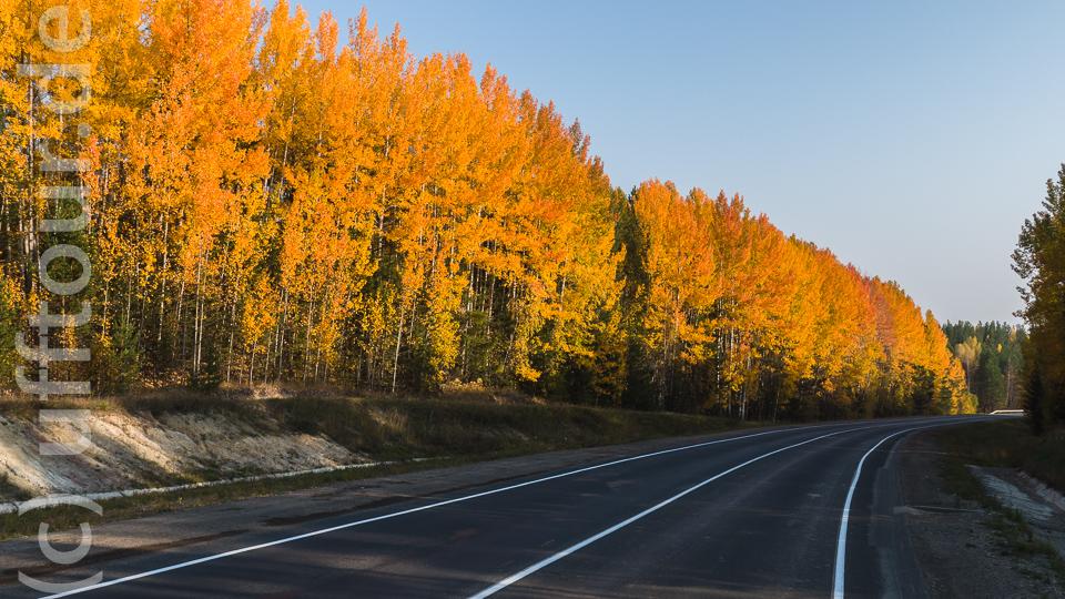 Die Herbstfarben werden stärker und machen uns den Abschied schwer.
